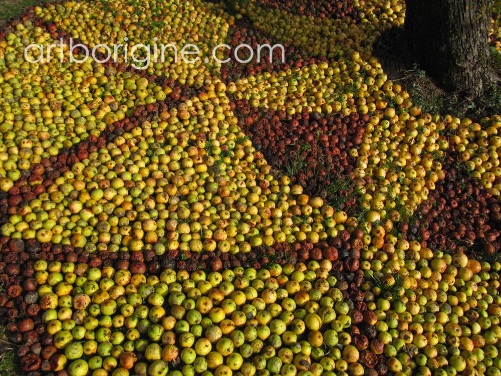 Pommes de Rainette